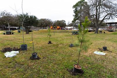 Tree Planting_Satsuma_2021_011