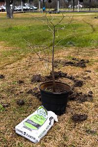 Tree Planting_Satsuma_2021_013