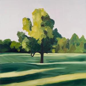 Georgia Tree Morning