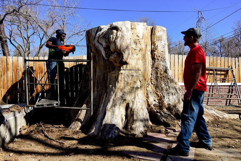 Bongo Love Tree Carving Longmont