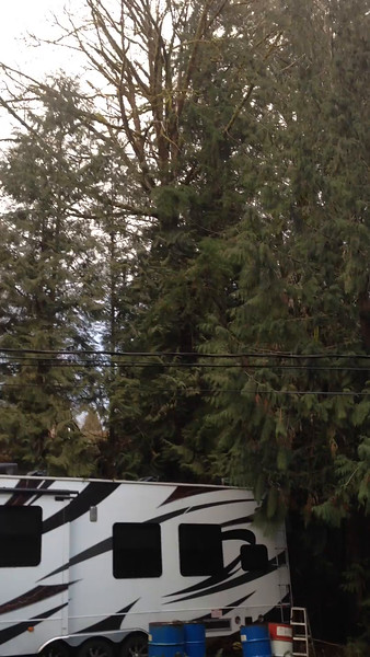 This video shows how the large tree hangs over my trailer and my house.
