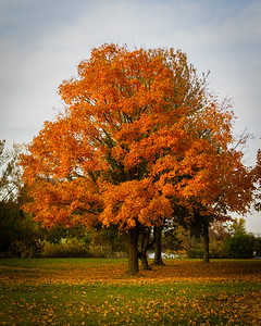 Colorful Fall Tree
