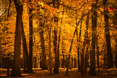 Sun Drenched Forest