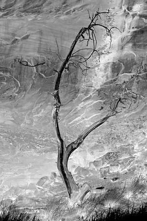 Spirit Tree in Black and White