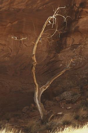 Spirit Tree in Sepia