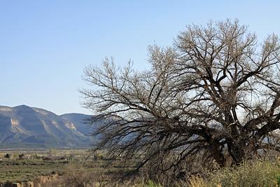 Mesa Verde Lives On