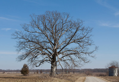 Old Tree in Country 2
