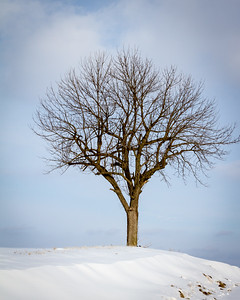 Tree in Snow 2