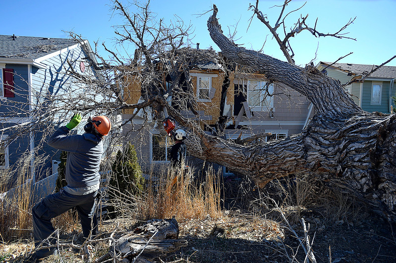 Jason Hinman, right, and Don Paulley, both with Alpine Arborists, remove branches from a huge tree that fell on a house at 4049 Crawford Ct. in Loveland Tuesday, Feb. 21, 2017. (Photo by Jenny Sparks/Loveland Reporter-Herald)