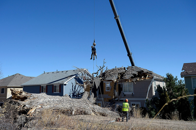A crane lifts Jason Hinman with Alpine Arborists into place so he can cut branches from a large tree that fell on a house at 4049 Crawford Ct. in Loveland Tuesday, Feb. 21, 2017. (Photo by Jenny Sparks/Loveland Reporter-Herald)