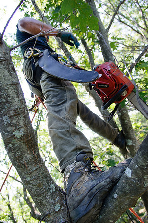 Tree Specialists Full Resoltion Selects