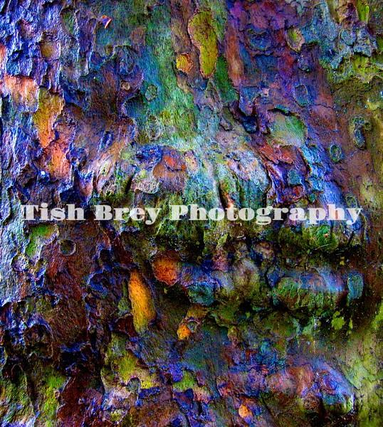 Tree Bark Colors