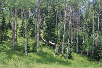 One fallen tree