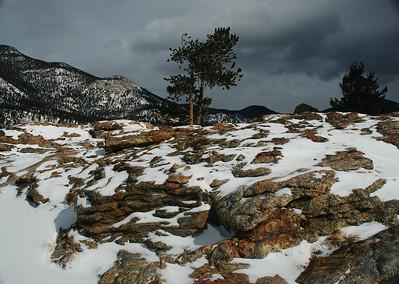 Rocky Pine