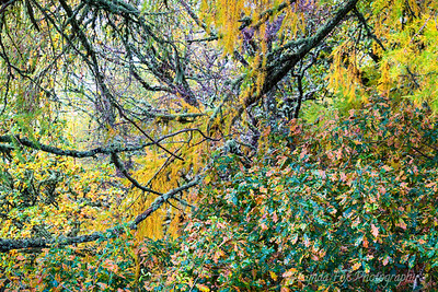 Fall Trees Closeup