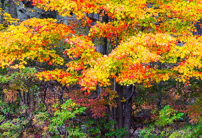 Canapy of Fall Colors