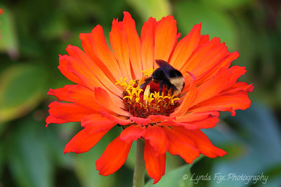 Busy Bee inside Flower