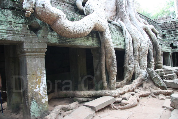 Silk Cotton Tree, Ta Prohm Temple, Angkor Wat, Cambodia