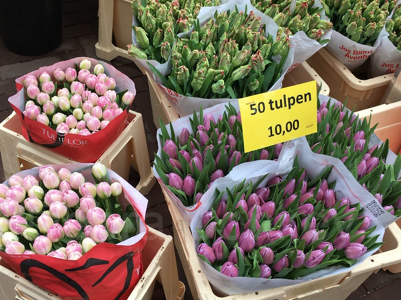 Tulips, Flowermarket, Amsterdam, The Netherlands
