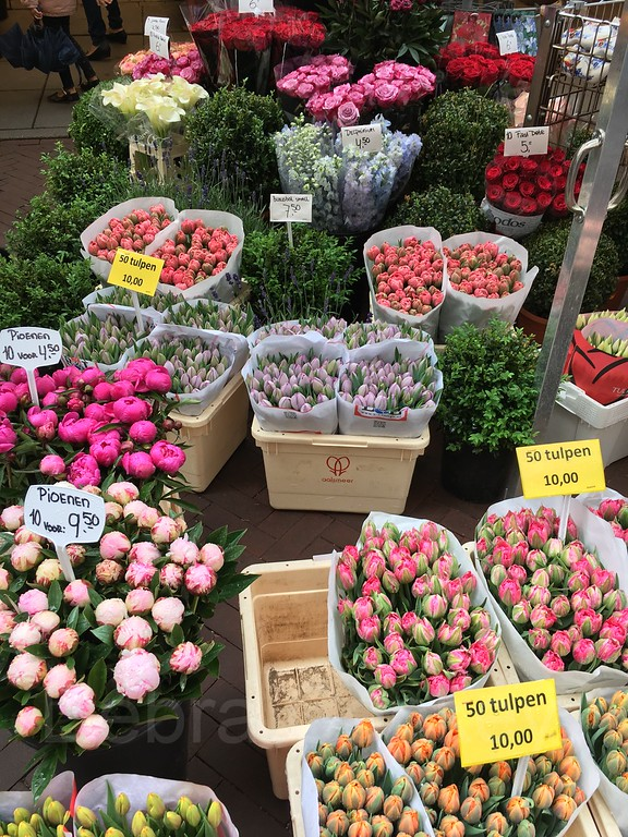 Tulips and flowers, Flowermarket, Amsterdam, The Netherlands