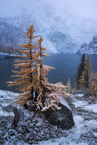 Golden Larch trees meeting the first signs of Winter - The Enchantments, Washington