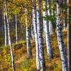 Fall in Scandinavia