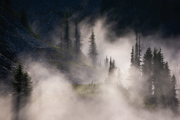 Low fog floats between sunlit trees - Rainier, Washington