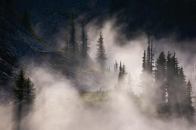 Low fog floats between sunlit trees - Rainier, Washington