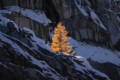A lone larch tree basks in mid morning sunlight up in The Enchantments - Washington