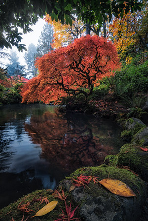 Vibrant Fall colors on display at Kubota Gardens, Seattle - Washington