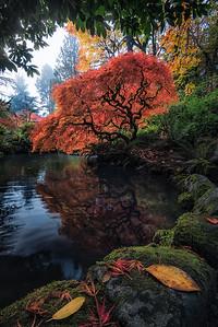 Vibrant Fall colors on display at Kubota Gardens - Washington