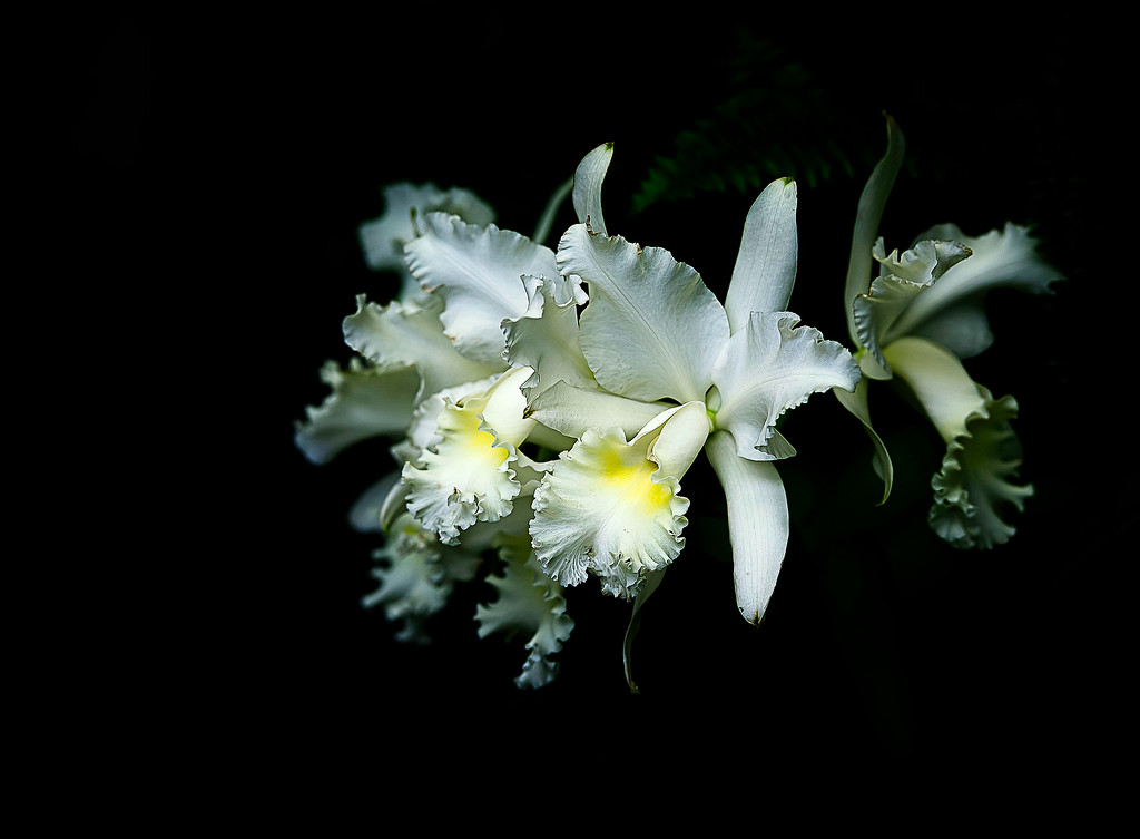 Orchid; 2013
