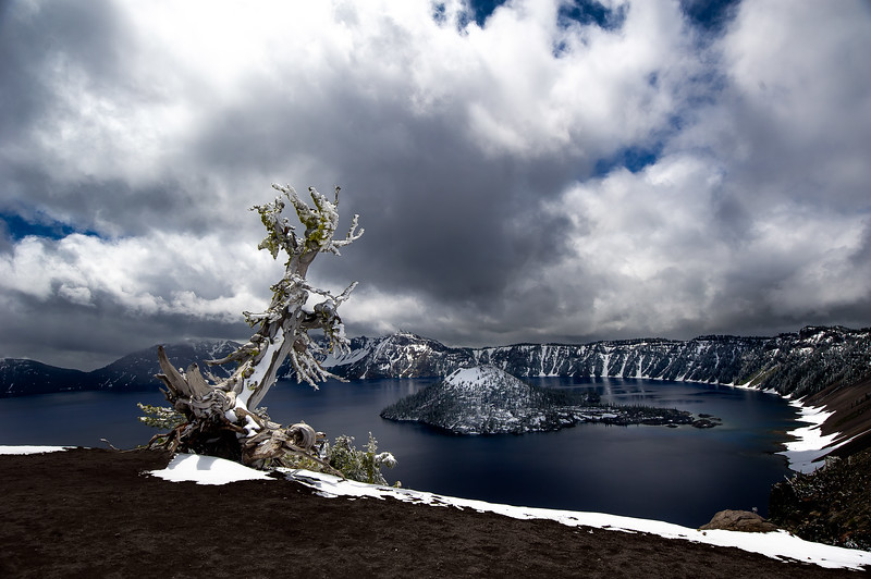 Dead Tree; Crater Lake; Oregon; USA; 2016