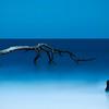 Dead Tree; Hunting Island State Park; St Helena Island; South Carolina; USA; 2015