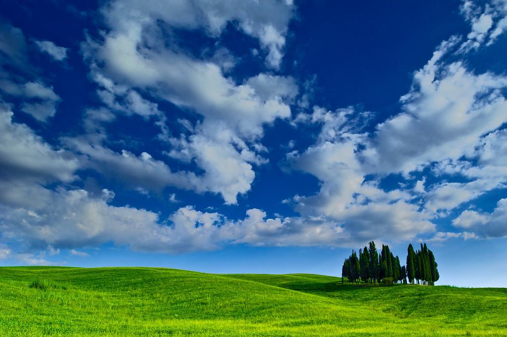 Cypress Trees; Val d'Orcia; Tuscany; Italy; 2011