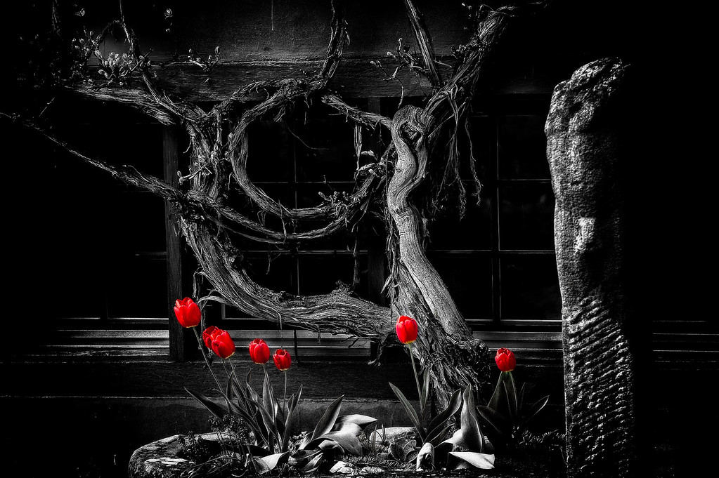 Vine & Tulips; 2013