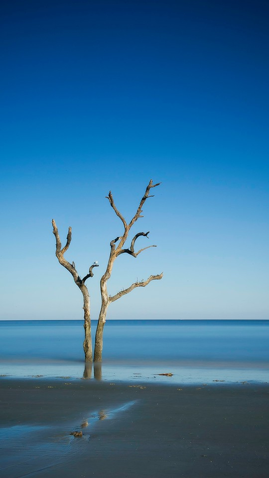 Dead Tree; Hunting Island State Park; St Helena Island; South Carolina; USA; 2015
