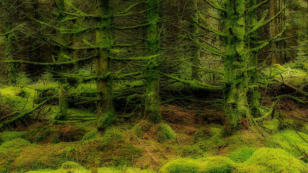 Mossy Trees; Ireland; 2013