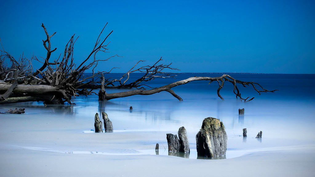 Dead Trees; Hunting Island State Park; St Helena Island; South Carolina; USA; 2015