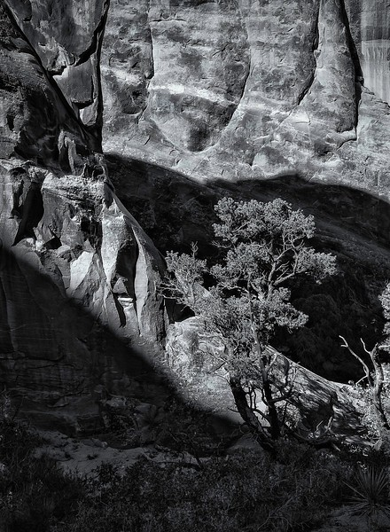 Tree; Arches National Park; Utah; USA; 2016