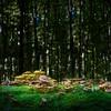 Mushrooms; Zwieslerwaldhaus; Wazlikhain; Bayerischer Wald; Germany; 2013