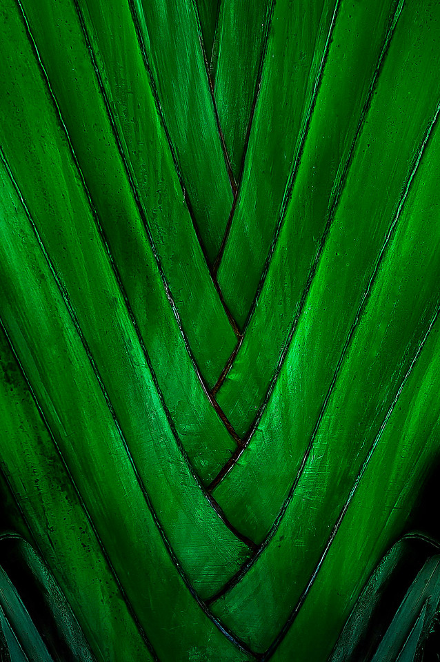 Palm Leaf; Key West; Florida; USA; 2006