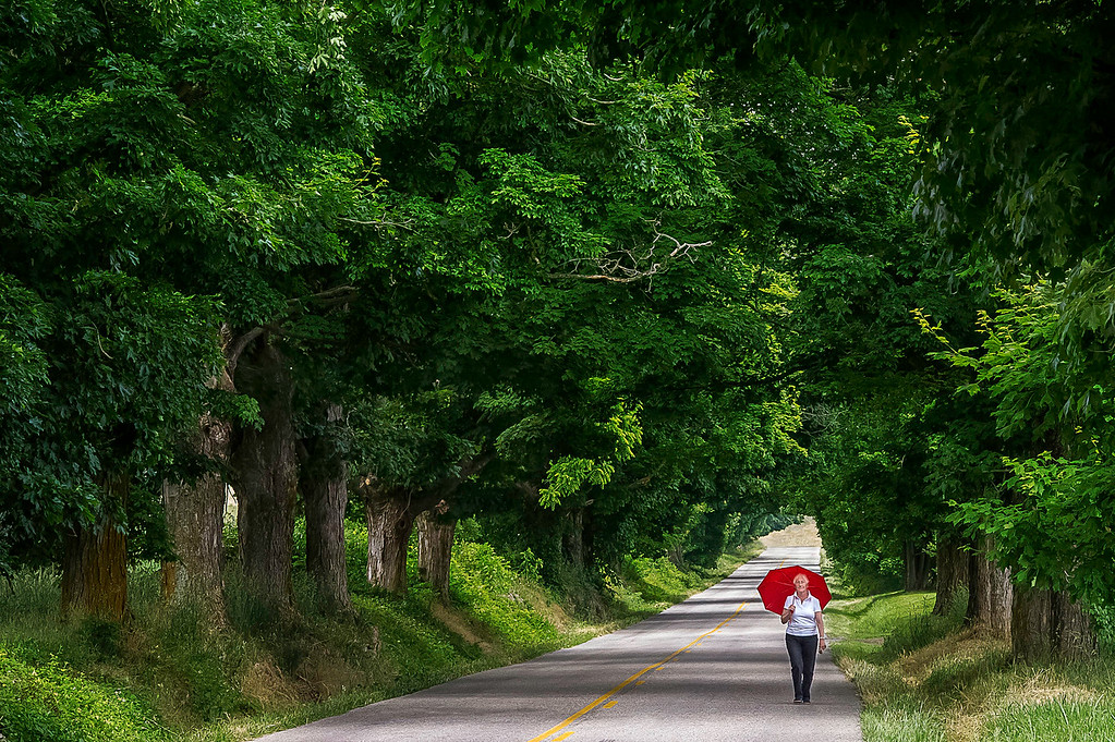 Avenue of Trees; Rockbridge County; Virginia; USA; 2013