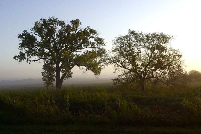 Trees of the Early Morning, Landscapes