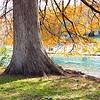 A Comal Cypress