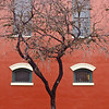 Four Windows and a Tree