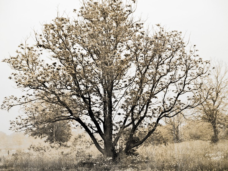 The Isolation of Tree