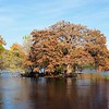 A Comal River Beauty