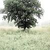 The Isolation of Tree II