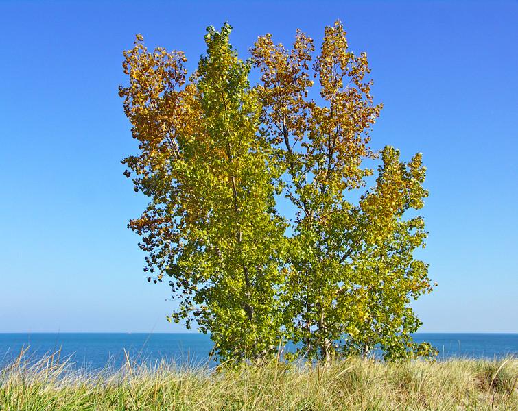Dune Tree